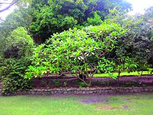 Arboretum - Now