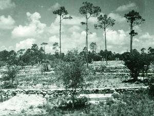 Arboretum - Then