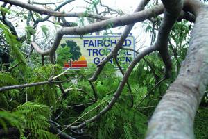 HistoryMiami Hurricane Andrew Photo