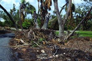 Hurricane Andrew - Fallen Trees