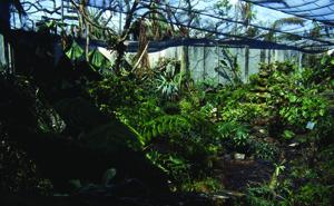 Hurricane Andrew - Plant Conservatory