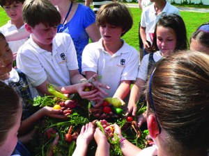 Growing a School Garden