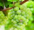 bigstock-Ripe-Riesling-white-vine-grape-41545891