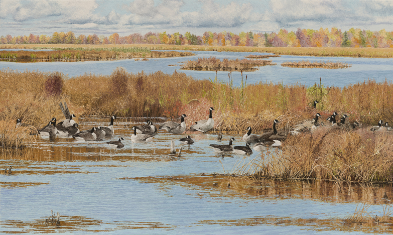 Thirty Four Geese, 8 x 12 for SOMI