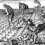 Timucuan-Indians-Planting-Maize